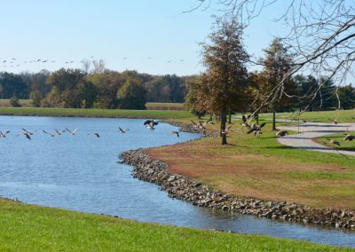 birds in flight over lake at The Aviary Recovery Center