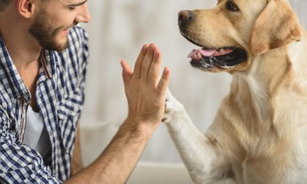 Health Benefits of Animal Assisted Therapy