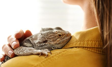 Furry, Feathery, or Even Scaly Friends Can Provide a Boost to Your Recovery
